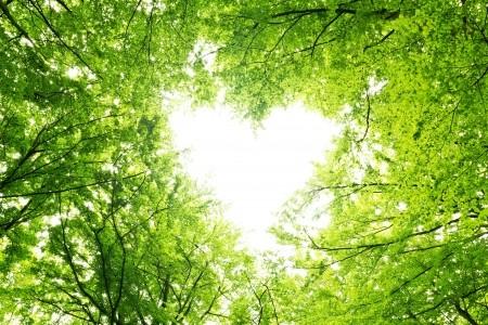 Zitat von Khalil Gibran - Bäume sind Gedichte ...